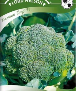 Broccoli - Premium Crop F1 - Lord Nelson fröer