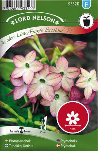 Blomstertobak - Avalon Lime/Purple F1 - Lord Nelson fröer