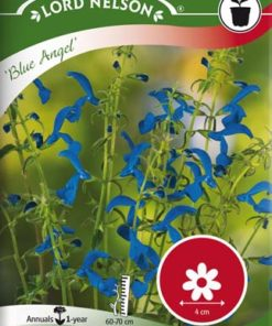 Blåsalvia- Blue Angel - Lord Nelson fröer