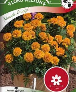 Tagetes - Sammets - Mowgli Orange - mini - Lord Nelson fröer
