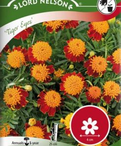 Tagetes - Sammets - Tiger Eyes - Lord Nelson fröer