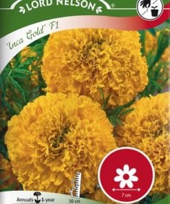 Tagetes, Stor-, Inca Gold F1 - Lord Nelson fröer