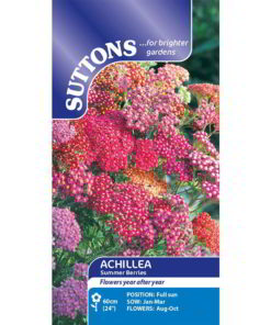 Achillea Summer Berries-0