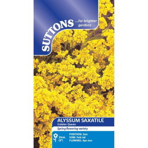 Alyssum Saxatile Golden Queen-0
