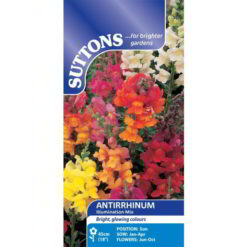 Antirrhinum Illumination Mix-0