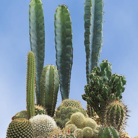 Cactus Prickly Characters-8837
