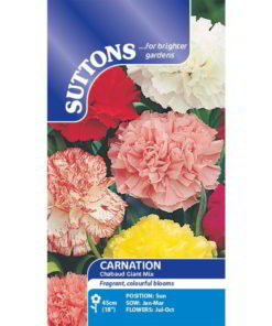 Carnation* Chabaud Giant Mix-0