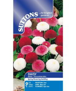 Daisy Bellis - Pincushion Mix-0
