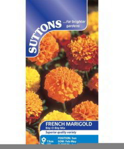 French Marigold Boy'O'Boy Mix-0