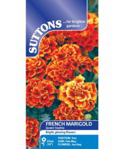 French Marigold Queen Sophia-0