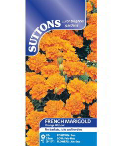 French Marigold Orange Winner-0