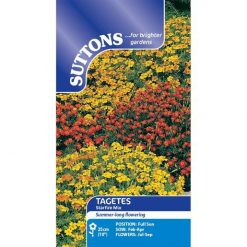 Tagetes Star Fire Mix-0