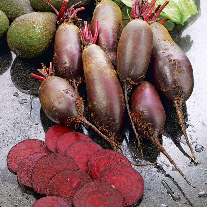 Beetroot Cylindra-8972