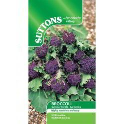 Broccoli Summer Purple - Sprouting-0