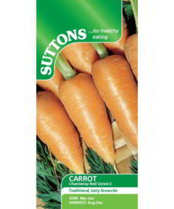Carrot Chantenay Red Cored 2-0