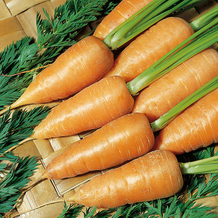 Carrot Chantenay Red Cored 2-9011
