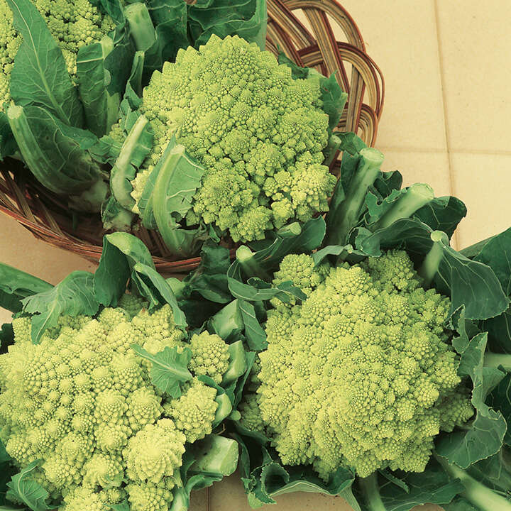 Cauliflower Romanesco Early-9016