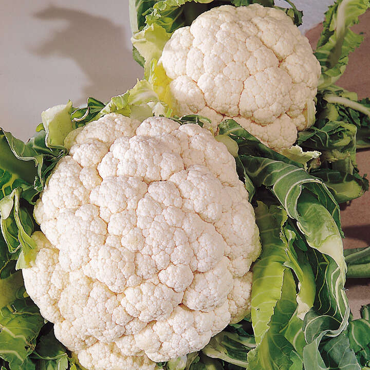 Cauliflower Snowball A-9020