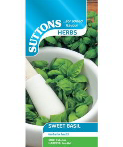 Herb Sweet Basil-0