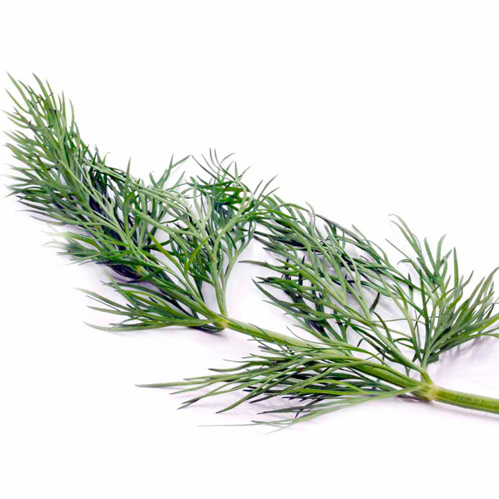 Herb Dill-9045