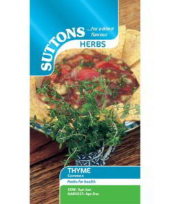 Herb Thyme Common-0