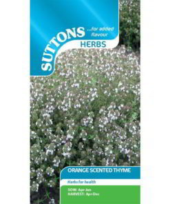Herb Thyme Orange Scented-0