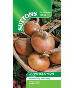 Onion (Japanese) Senshyu Semi-Globe Yellow-0