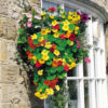 Krasse - Nasturtium Dayglow Mix Seeds