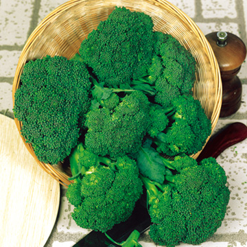 Broccoli F1 Green Magic - Sutton Seeds