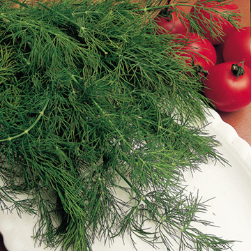 Dill - Sutton Seeds