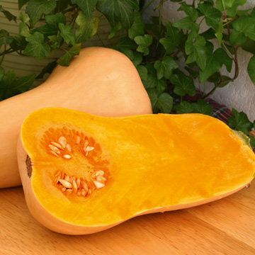 Squash - Sutton Seeds - F1 Hunter