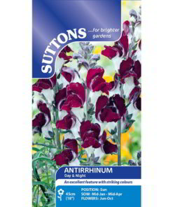 Antirrhinum Day & Night-0
