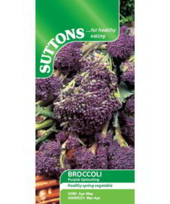 Broccoli Purple Sprouting-0