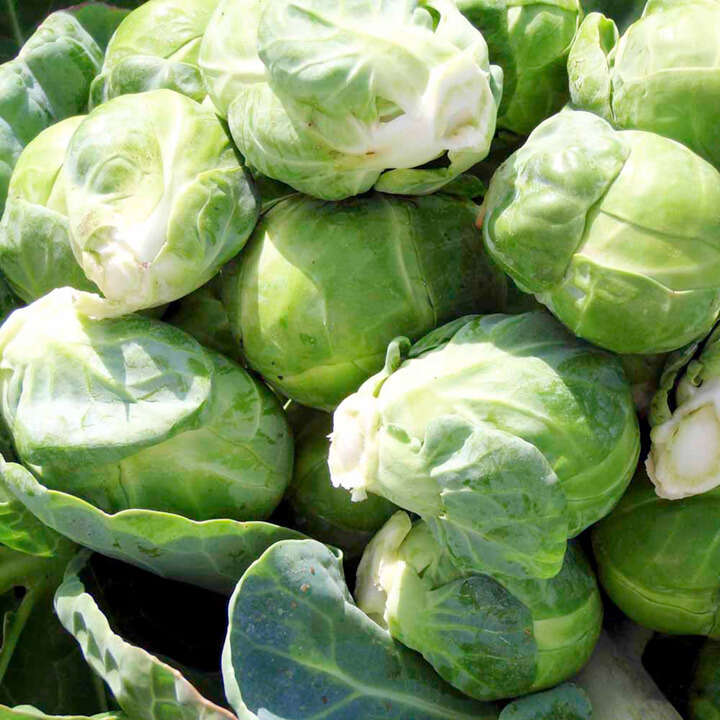 Brussels Sprouts Content F1-8983
