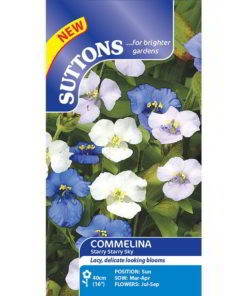 Commelina Starry Starry Sky-0
