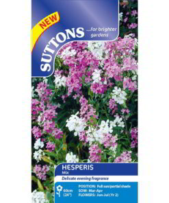 Hesperis Mix-0