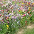 Blomsterblandning – FloralFusions – La Cenicienta – Suttons Seeds