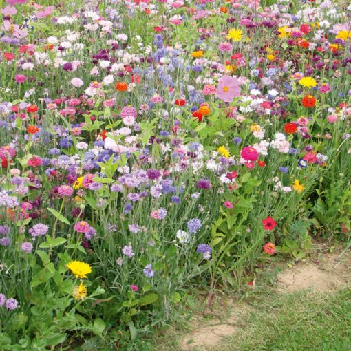 Blomsterblandning - FloralFusions - La Cenicienta - Suttons Seeds