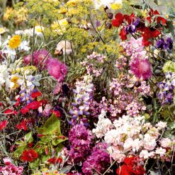 Blomsterblandning - Floralfusions - Fleures Parfumees - Suttons Seeds