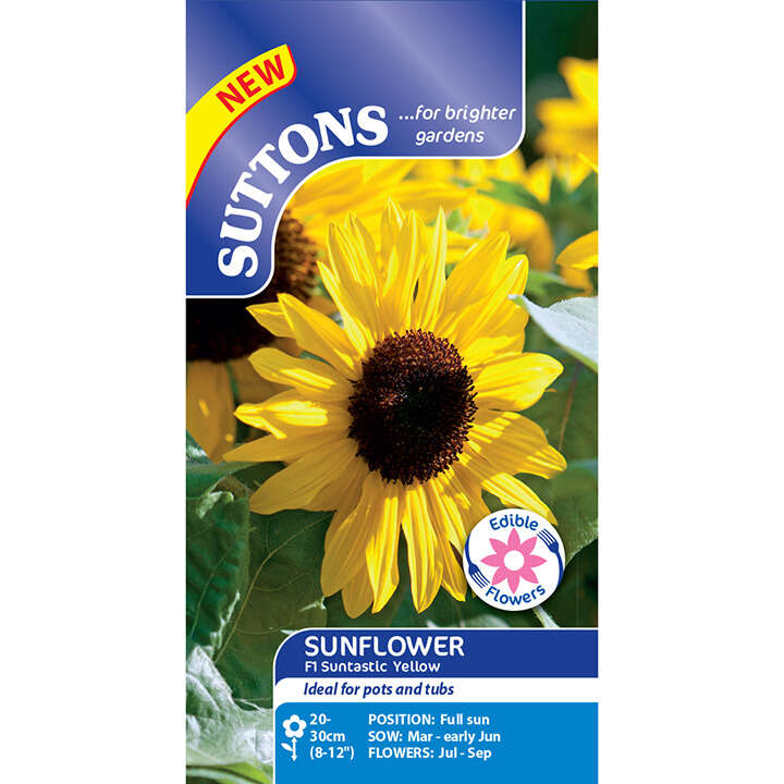 Solros ´Sunflower Seeds - F1 Suntastic Yellow`-Suttons Seeds