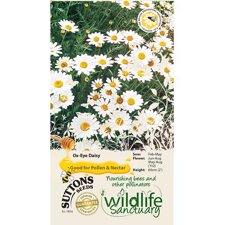 Wildlife Garden - Ox-Eye Daisy-0