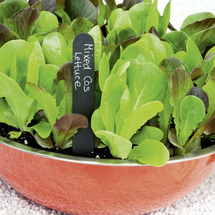 Sallat ´Lettuce Seeds - Cos Lettuce Mix`-Suttons Seeds