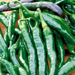 "Chili (Chilli Seeds ) "" Chilaca"" - Sutton Seeds"