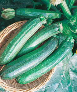 "zucchini (Courgette Seeds ) "" F1 Tarmino"" - Sutton Seeds"