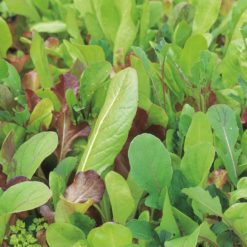 "Salat (Salad Leaves Seeds ) "" Mild and Sweet"" - Sutton Seeds"