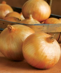 "Lök (Onion Seeds ) "" F1 Bridger"" - Sutton Seeds"