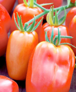 "Tomat (Tomato Seeds ) "" Twin Pack Ildi/San Marzano"" - Sutton Seeds"