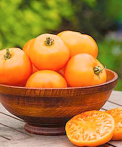 "Tomat (Tomato Seeds ) "" Twin Pack Gardeners Delight/Tangerine"" - Sutton Seeds"