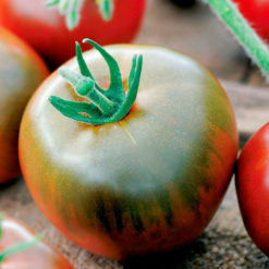 "Tomat (Tomato Seeds ) "" Black Prince"" - Sutton Seeds"