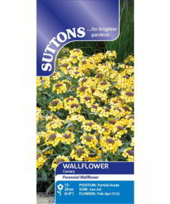 Wallflower Canary - The Perennial Wallflower-9647